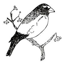 Grosbeak UNMOUNTED bird rubber stamp #9