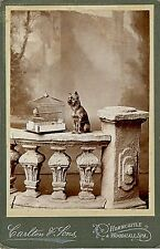 A dog and a bird. 2 cabinet cards. Lot 190
