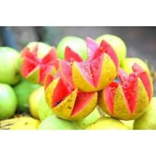 Pink Guava Amazonian Fruit - 1794 - EXOTIC Fragrance Oil Supply - 4 Oz (120 ml)