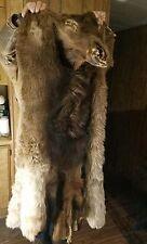 """LRG THICK Tanned BULL ELK HIDE Hair Fur Taxidermy Cabin DECOR Log Home 62""""L×70""""W"""
