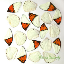 GIFT 20 pcs real BUTTERFLY wing material  DIY artwork jewelry  #33