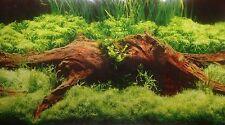 poster fond d aquarium decor   double face plantes / bois 60 x 30 cm