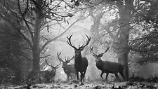 ANIMALS DEER FOREST BLACK AND WHITE Large Wall Art Canvas Picture 20 x 30""