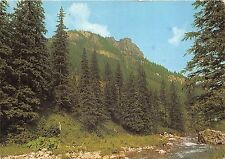B27479 Tatry Zachodnie Dolina Koscieliska    poland