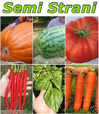 60 SEEDS of THE GIANTS: WATERMELON, TOMATO, PUMPKIN, BASIL, CHILI LONG, CARROT