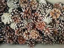 200 Small  Pine Cones 2,5,-3, 5 cm professional quality natural.
