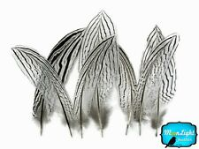 """10 Pieces - 6-8"""" NATURAL SILVER Tail pheasant feathers"""