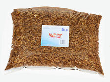 5 LBS Bulk Dried Mealworms-Treats for Chickens & Wild Birds by YUMMYWORMS