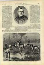 1875 cardenal Antonelli antílopes Estampación serpiente de cascabel hasta la muerte