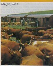 1982  --  CHARGEMENT DE BESTIAUX A DE LANDEYRAT   3E760