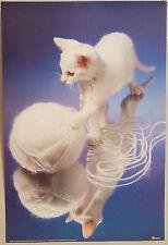 (PRL) 1987 CAT PLAYNG KITTEN GATTO MICIO HORN VINTAGE AFFICHE PRINT POSTER ART