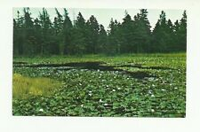 WATER LILLIES ADJACENT TO RED POINT EAST OF SOURIS PRINCE EDWARD ISLAND POSTCARD