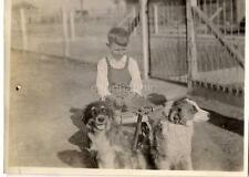Bib Overalls Farm Boy Kid On Wagon & Mushing Team Border Collies? Dogs Vtg Photo