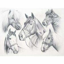 HORSES PONY PONIES MARES SKETCHING SET DRAWING PENCILS BY NUMBERS KIT