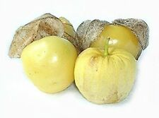 PINEAPPLE TOMATILLO 50 SEEDS EXTREMELY HARD TO FIND VERY SWEET GOOD FOR SNACKING