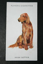 Red Setter      Irish Setter    Original Vintage Illustrated Card # VGC