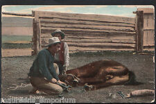 Animals Postcard - America - Cowboys Shoeing a Broncho  V445