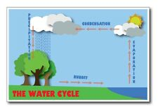 The Water Cycle - NEW Classroom Science Poster
