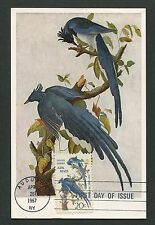 USA MK 1967 FAUNA AUDUBON BIRDS VÖGEL MAXIMUMKARTE CARTE MAXIMUM CARD MC d4471