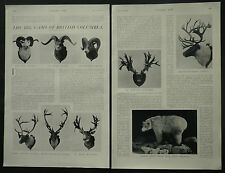 Canada Big Game Hunting British Columbia 1910 3 Page Photo Article 6688