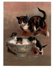 modern cat postcard Maguire calico mum cat watches kitten swimming in milk bowl