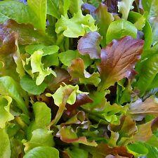 MESCLUN - HONEYMOON MIX - 400 Seeds [..six lettuce varieties for a leafy salad]