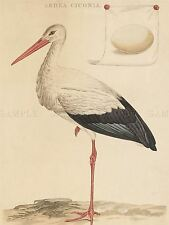 JAN CHRISTIAAN SEPP DUTCH WHITE STORK OLD ART PAINTING POSTER PRINT BB5790A