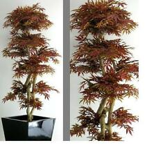 Acero Rosso  MAPLE Red Japan Giapponese Bonsai Piante finte Piante artificiali