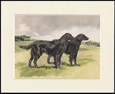 FLAT COATED RETRIEVER TWO DOGS LOVELY DOG PRINT MOUNTED READY TO FRAME
