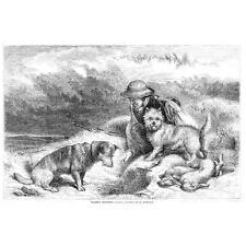 La Caza De Conejo Malla Con Perros-Huella De Antigua 1857
