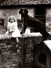 FLAT COATED RETRIEVER CHARMING DOG GREETINGS NOTE CARD DOG & LITTLE GIRL ON WALL