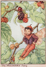 Flower fairies: the mulberry fairy impression vintage c1930 par cicely mary barker art