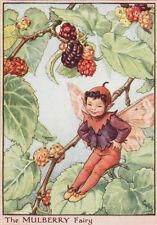 Flower fairies: the mulberry fairy impression vintage c1930 par cicely mary barker art