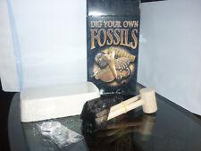SET COLLEZIONE FOSSILI MINERALI ARCHEOLOGIA dente squalo LENTE pennello ammonite