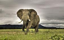 Libre de regalías foto genérica 6000+ 2 DVD de todos los animales de viaje de alimentos Sudáfrica