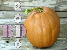 """Pumpkin """"REESEN MELON"""" - Sweet - Delicious - Appx 17 Seeds - Original Packing_85"""