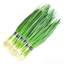 100 Chive Seeds Spring Onion Shallot Allium Schoenoprasum Scallion Organic D012