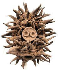 Art Africain - Fantastique Masque de Guerre à Cornes Naturelles Guéré - 81 Cms