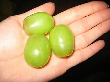 GRAPE SEEDS - GREEN TAME GIANT MUSCADINE GRAPE - Super Sweet Fruit - 15 Seeds