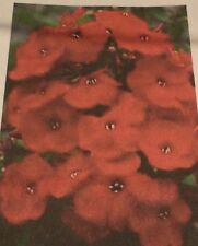 "Pack of 25 ""Red"" Phlox Seeds NEW!"