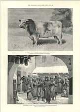 1892 Regina la vendita di razza Bull carestia Russia San Pietroburgo billets Alloggio