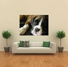 BOXER PUP PUPPY DOG NEW GIANT POSTER WALL ART PRINT PICTURE G318