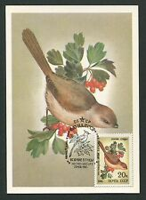 RUSSIA MK FAUNA VÖGEL BIRDS OISEAUX MAXIMUMKARTE CARTE MAXIMUM CARD MC CM d255