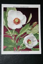 Shrubby Magnolia  Original Vintage 1930's Illustrated Colour Card