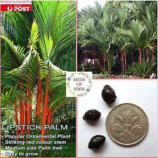5 LIPSTICK PALM SEEDS (Cyrtostachys renda); Red stem rare tropical plant