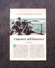 AQ75 - Clipping-Ritaglio - 1957 - I BALENIERI DELL'ANTARTICO