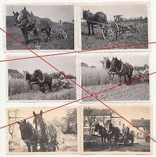 6 x Foto Pferde Haflinger bei der Feldarbeit um 1939 Pflug Landwirtschaft Bauer