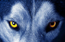 Framed Print - Sinister Yellow Eyes of a Wolf (Picture Animal Hunter Fox Poster)