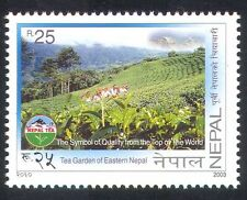 Nepal 2003 Tea Gardens/Plantations/Plants/Nature/Crops/Food/Drink 1v (n38946)