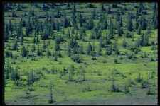 424086 Spruce Forest Northwest Territories Canada A4 Photo Print